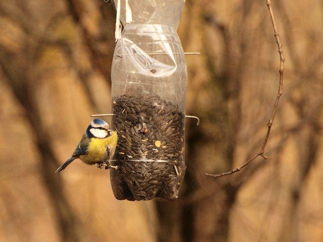 Jak Zrobić Karmnik Dla Ptaków Podpowiadamy Galeria I Zdjęcia