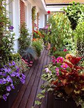 Taras kwiatowy