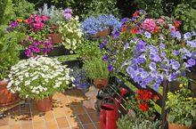 Uprawa kwiatów na balkonie