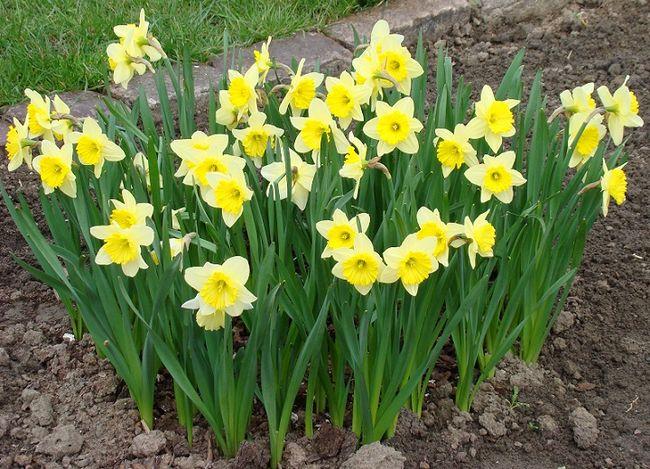 Kwiaty Wieloletnie Byliny Do Ogrodu Galeria I Zdjęcia
