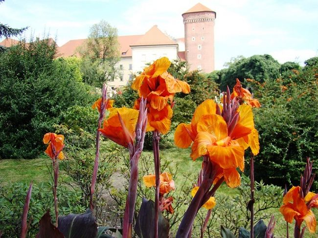Paciorecznik - kwiaty