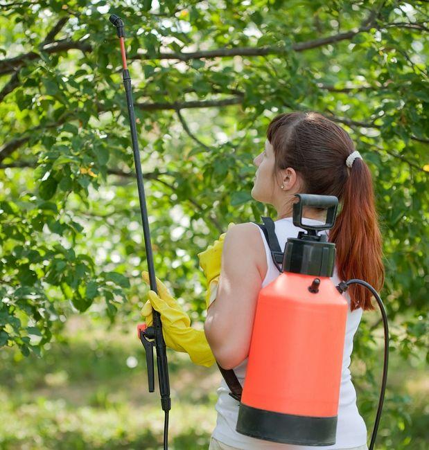 Oprysk drzew owocowych