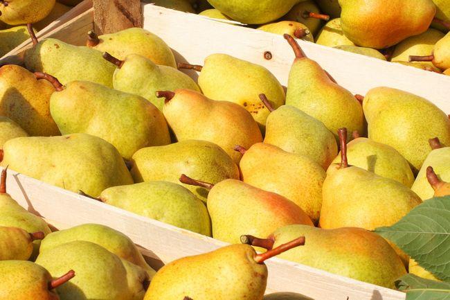 Owoce gruszy Bonkreta Williamsa