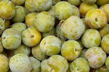 Owoce starej odmiany śliwy renkloda