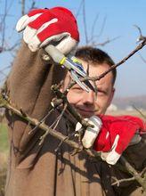 Przycinanie drzewka owocowego
