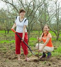 Sadzenie drzewka jabłoni