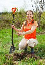 Sadzenie wiśni