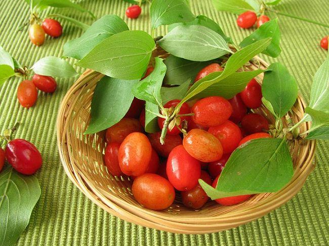 Dereń jadalny - owoce