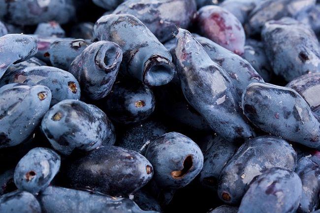 Jagoda kamczacka (borówka) - owoce