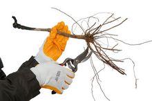Przycinanie korzeni przed sadzeniem