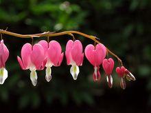 Serduszka z różowymi kwiatami