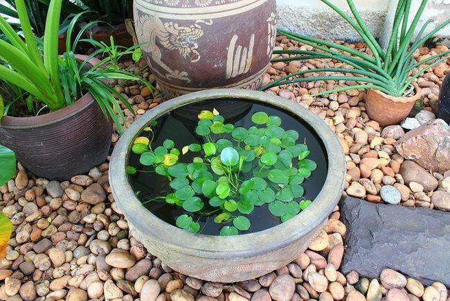 Misa ceramiczna z wodą i roślinami