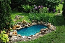 Małe oczko wodne w ogrodzie