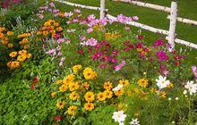 Ogród w stylu wiejskim