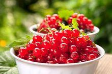 Porzeczka czerwona - owoce