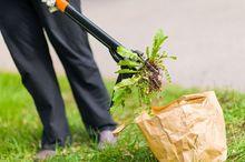 Ręczne zwalczanie chwastów z trawnika