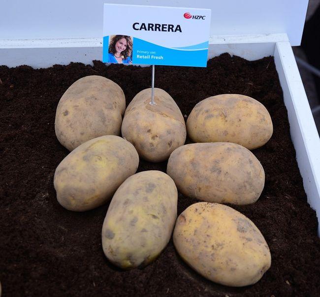 Ziemniaki Carrera