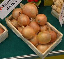 Odmiana cebuli: Majka
