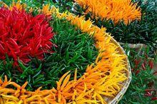 Papryczki chili - czerwone, zielone i żółte