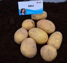 Ziemniaki Dali