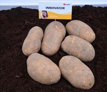 Ziemniaki Innovator