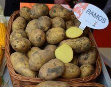 Ziemniaki Ramos