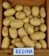Ziemniaki Regina
