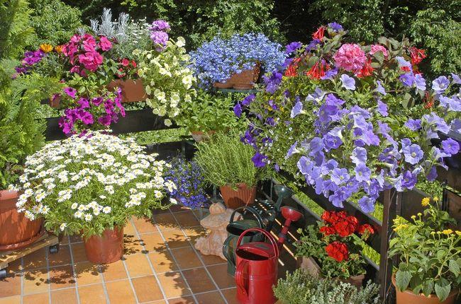 jakie kwiaty na balkon s oneczny