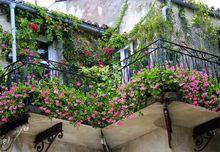 Aranżacja balkonu kwiatowego