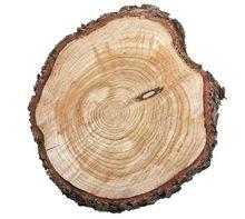 Przekrój drzewa