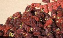 Owoce malinojeżyny