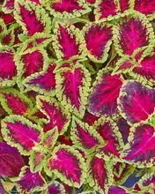 Kwiaty Doniczkowe Na Stanowisko Sloneczne Wszystko O Roslinach Swiatlolubnych
