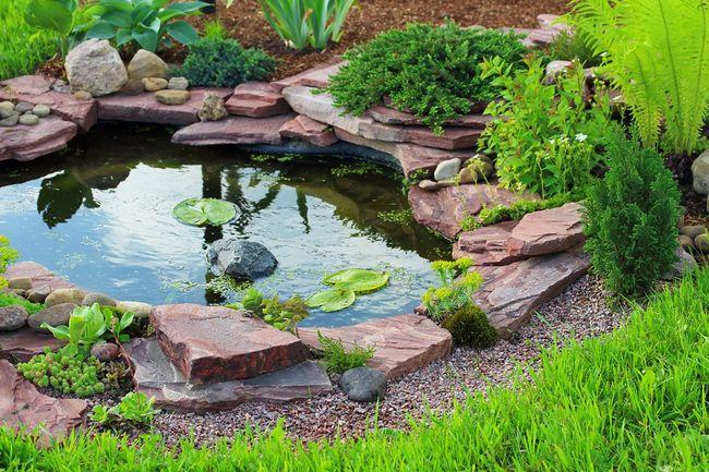Oczka wodne galeria zdj efektownych aran acji for Build your own fish pond