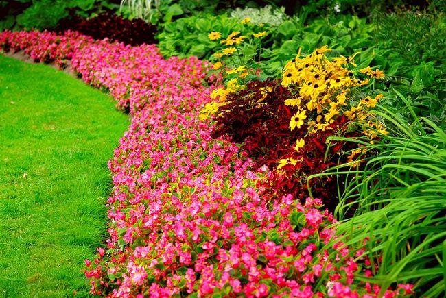 Aranżacja Pięknego Ogrodu Galeria I Zdjęcia