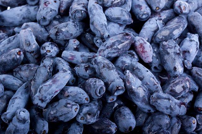 Owoce jagody kamczackiej