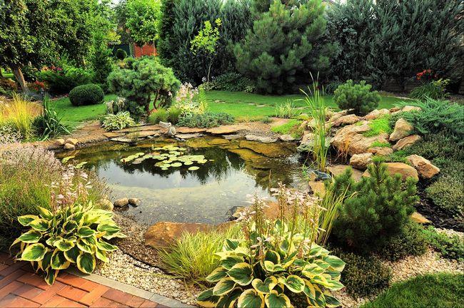 Oczko wodne w ogrodzie