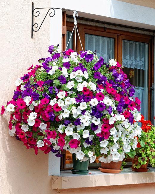 Красочные гирлянды из ампельных цветов  Возле Дома