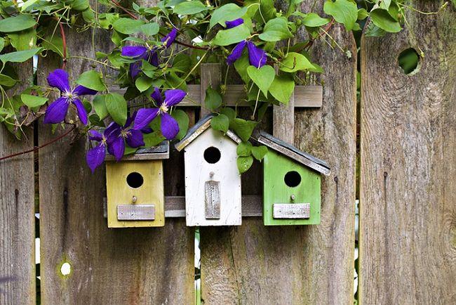 Budki dla ptaków