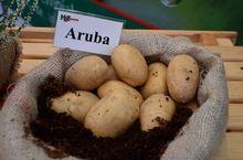 Ziemniaki Aruba