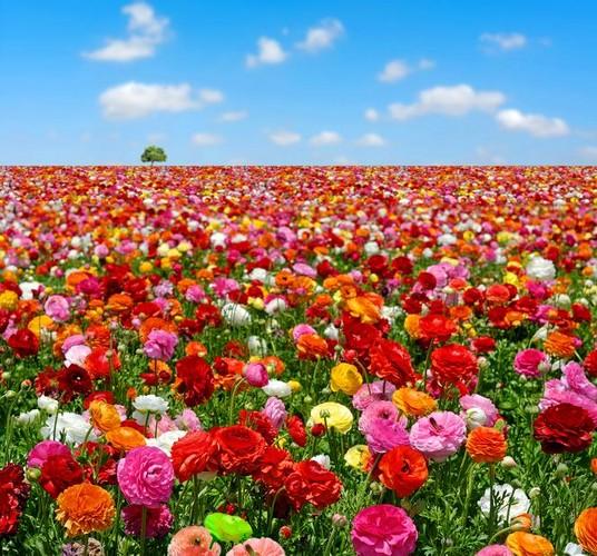 Kwiaty Cięte Trwałość Kwiatów W Wazonie