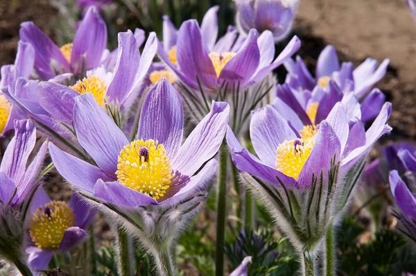 Wiosna Pelna Kwiatow Te Rosliny Sprawia Ze Wiosna Jest Taka Piekna Zielony Ogrodek
