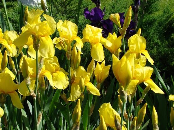 Kwiaty Wieloletnie Byliny Do Ogrodu