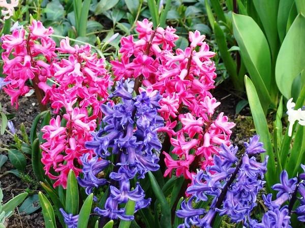 Kwiaty Wiosenne Profesjonalne Porady I Artykuły