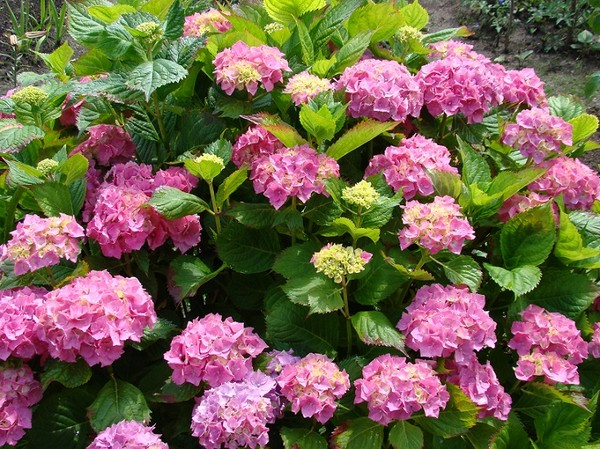 Kwiaty Letnie Profesjonalne Porady I Artykuły