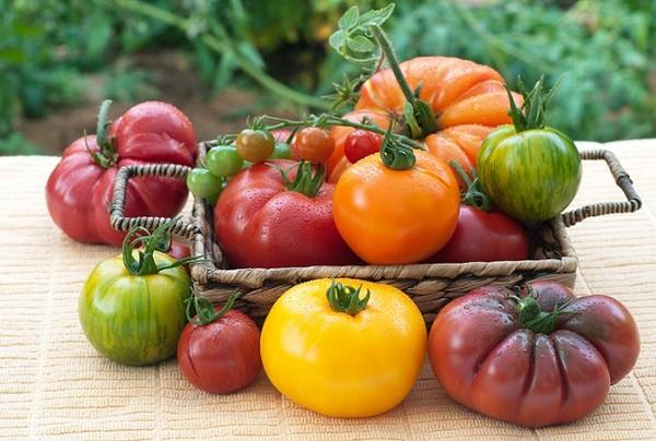 Pomidorowy show…