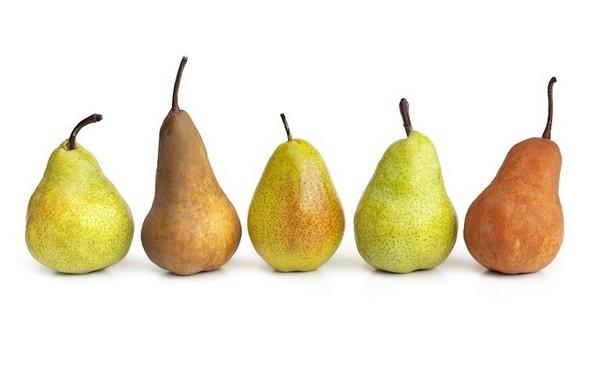 Znalezione obrazy dla zapytania odmiany gruszek