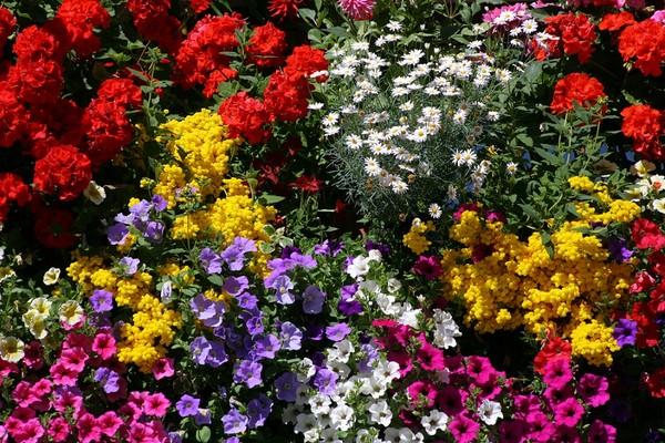 Kwiaty Profesjonalne Porady I Artykuły