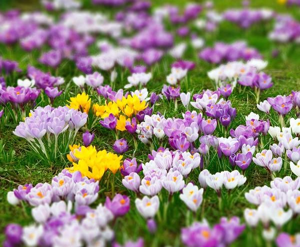 Kwiaty Wiosenne Profesjonalne Porady I Artykuly
