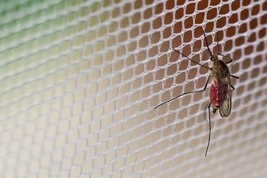 Moskitiery - skuteczna ochrona przed owadami