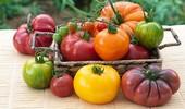 Odmiany pomidorów - charakterystyka najlepszych